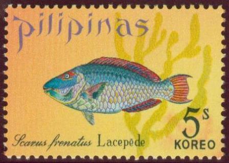 Fish-5s.jpg